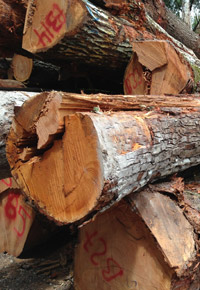 stack of Genuine Mahogany logs