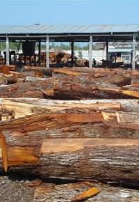 Mahogany logging operation