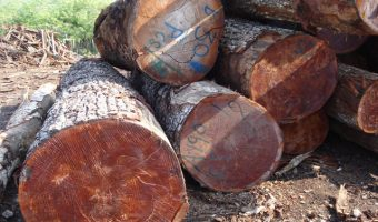 """Defining Terms: What """"Quality Control"""" Means for Hardwoods, Part 1"""