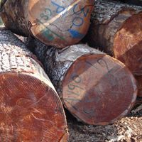 Economic Forces Causing Shortages with Mahogany & Its Alternatives