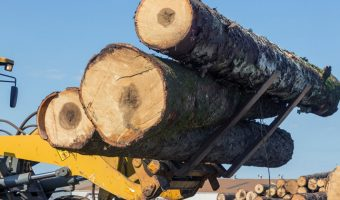 large heavy logs being carried by mover truck