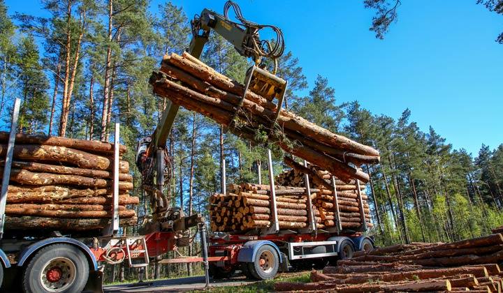 loading log truck with freshly cut tree logs