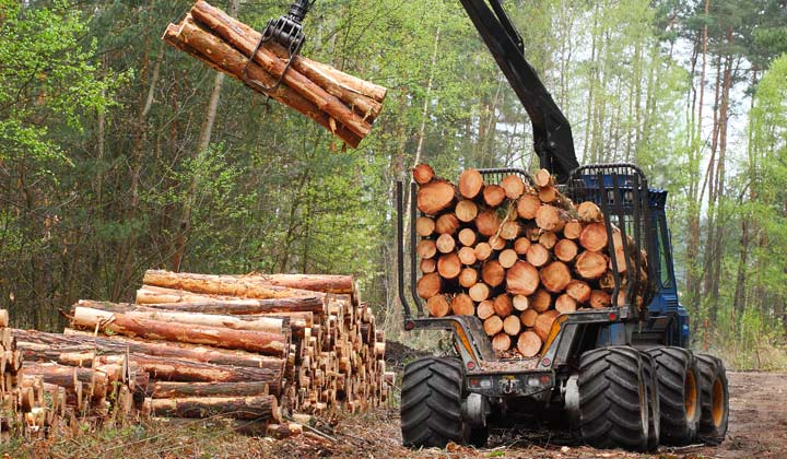logging truck stacking newly cut tree logs